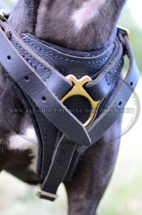 Professional Leather Dog Harness