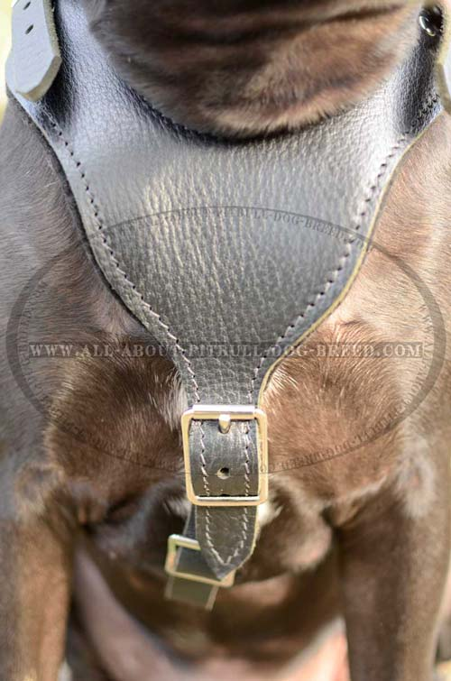 Elegant Leather Dog Harness For Everyday Wear