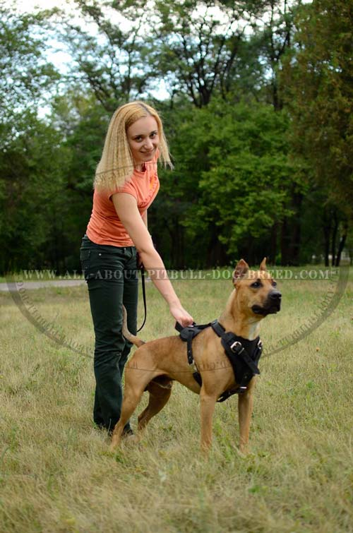 Leather Pit Bull Harness Allows You to Be in Easy Contact with Your Doggie