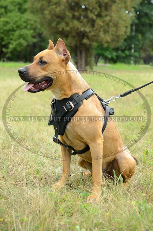 Leather Dog Harness Long-Servicing Top-Quality Safe