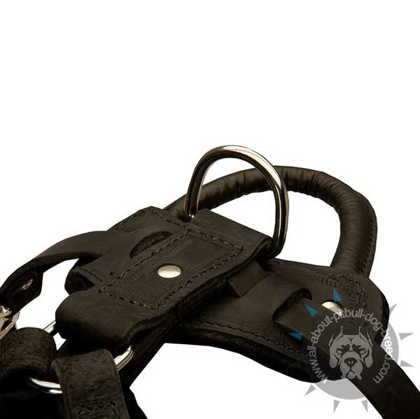 Most  demandable dog harness