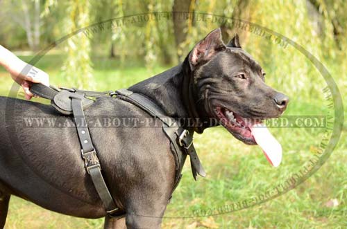 Leather Dog Harness with Handle for Control Over Pitbull