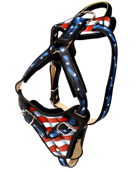 Best custom leather dog harness for American Pit Bull Terrier