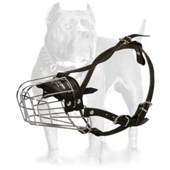 Dog muzzle to stop a Pitbull from chewing things up