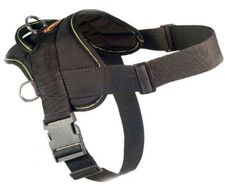 Fashion Dog Harness-Everyday Harness for Pitbull