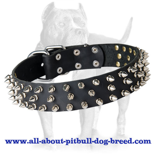 Top Quality Spiked Leather Collar with Nickel-plated Fittings