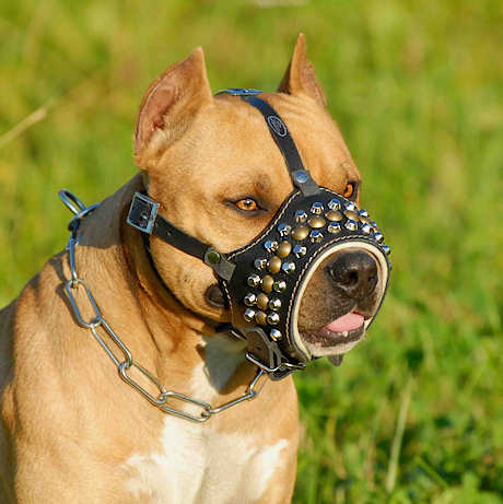 Royal Pyramids with Studs Leather Dog Muzzle for Pitbulls ...