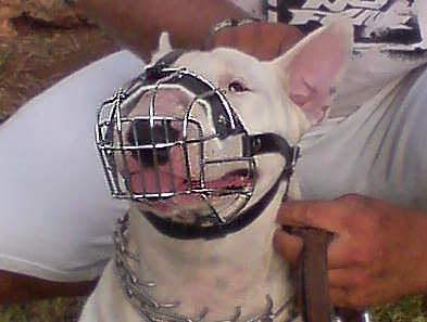 Multifunctional Wire Basket Pitbull Muzzle