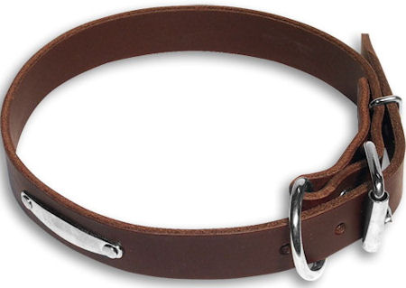 PITBULL Id collar Brown collar 23'' /23 inch dog collar-C456