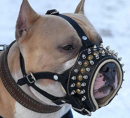 pitbull spiked dog muzzle