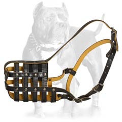 Leather dog muzzle is strong equipment