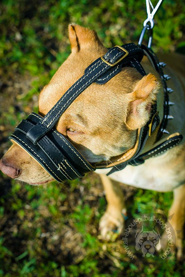Stitched leather Pitbull muzzle