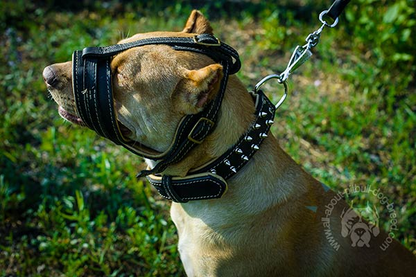 Lightweight leather Pitbull muzzle