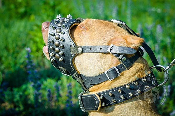 Nappa padded leather Pitbull muzzle