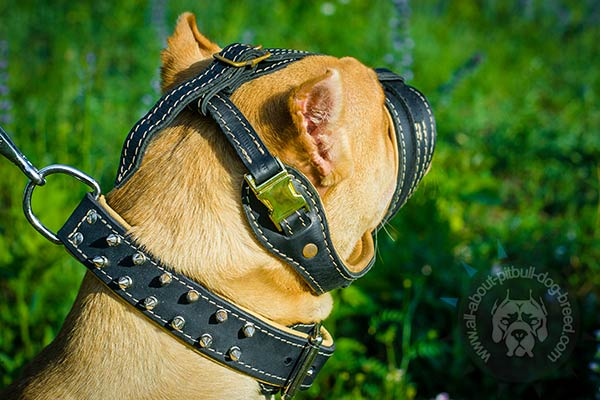 Ventilated leather Pitbull muzzle