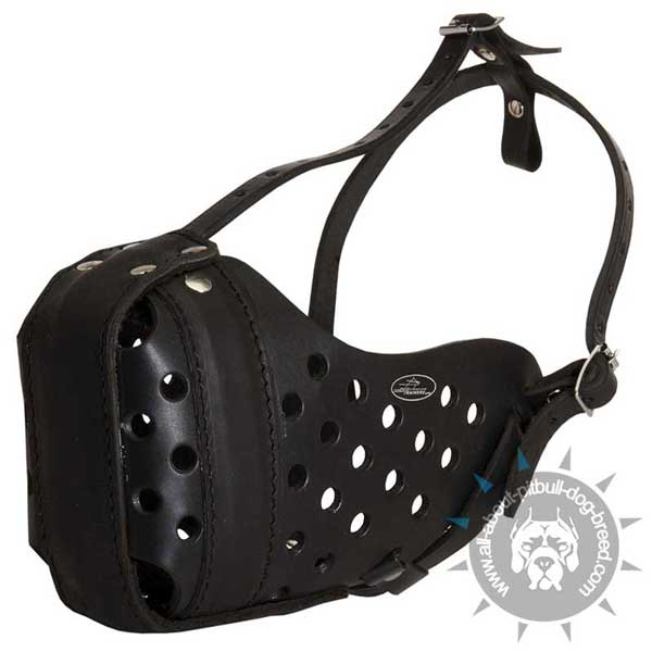 Padded on Nose Leather Muzzle