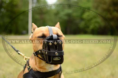 Designer Basket Leather Dog Muzzle