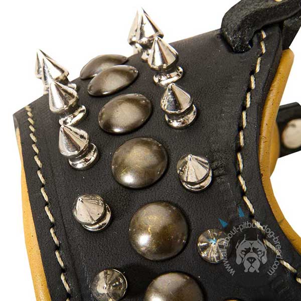 Pitbull Muzzle Decorated with Spikes and Studs