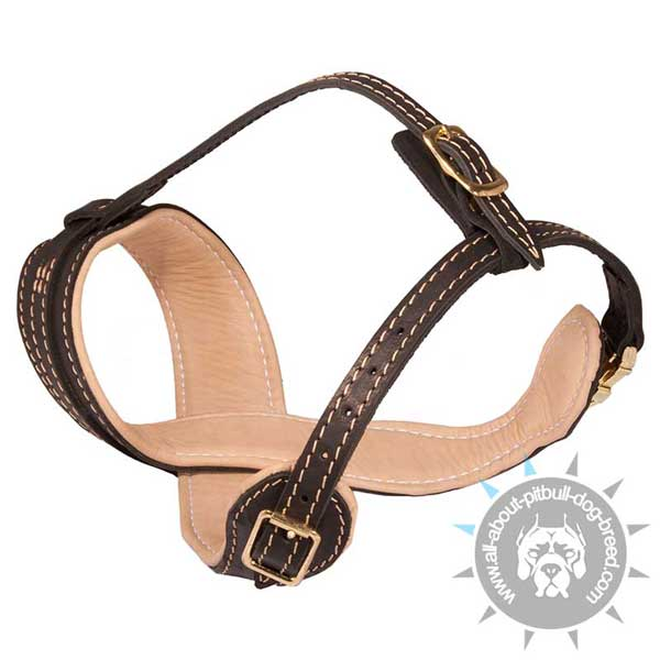 Loop-Like Leather Pitbull Muzzle with 2 Adjustable Straps