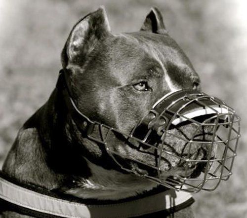Fully adjustable Pit Bull dog wire muzzle