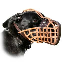 Safety walk Pit Bull dog leather muzzle