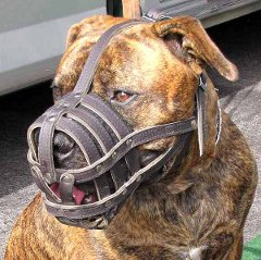 Comfortable Pit Bull dog leather muzzle