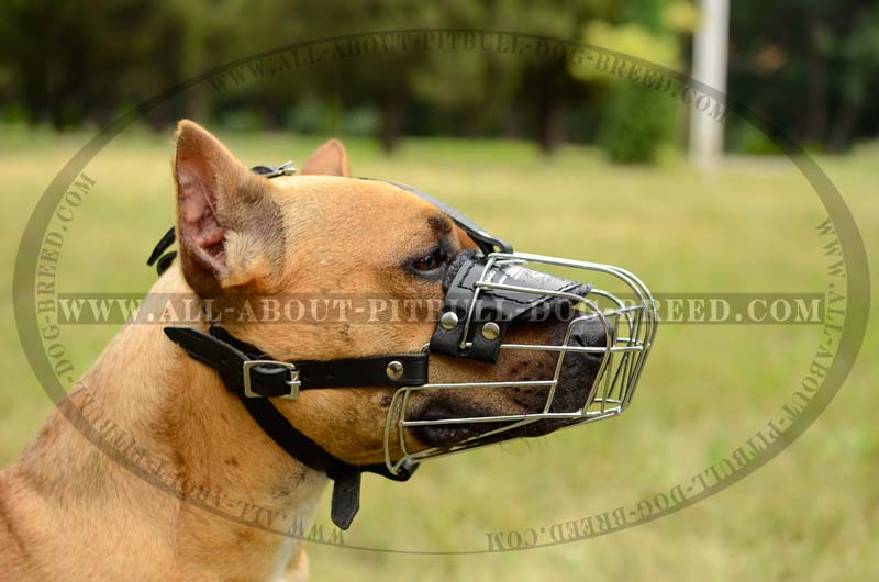 Top Quality Pitbull Breed Wire Dog Muzzle