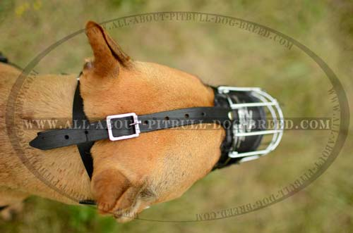 Easy-to-use Metal Pitbull Dog Muzzle