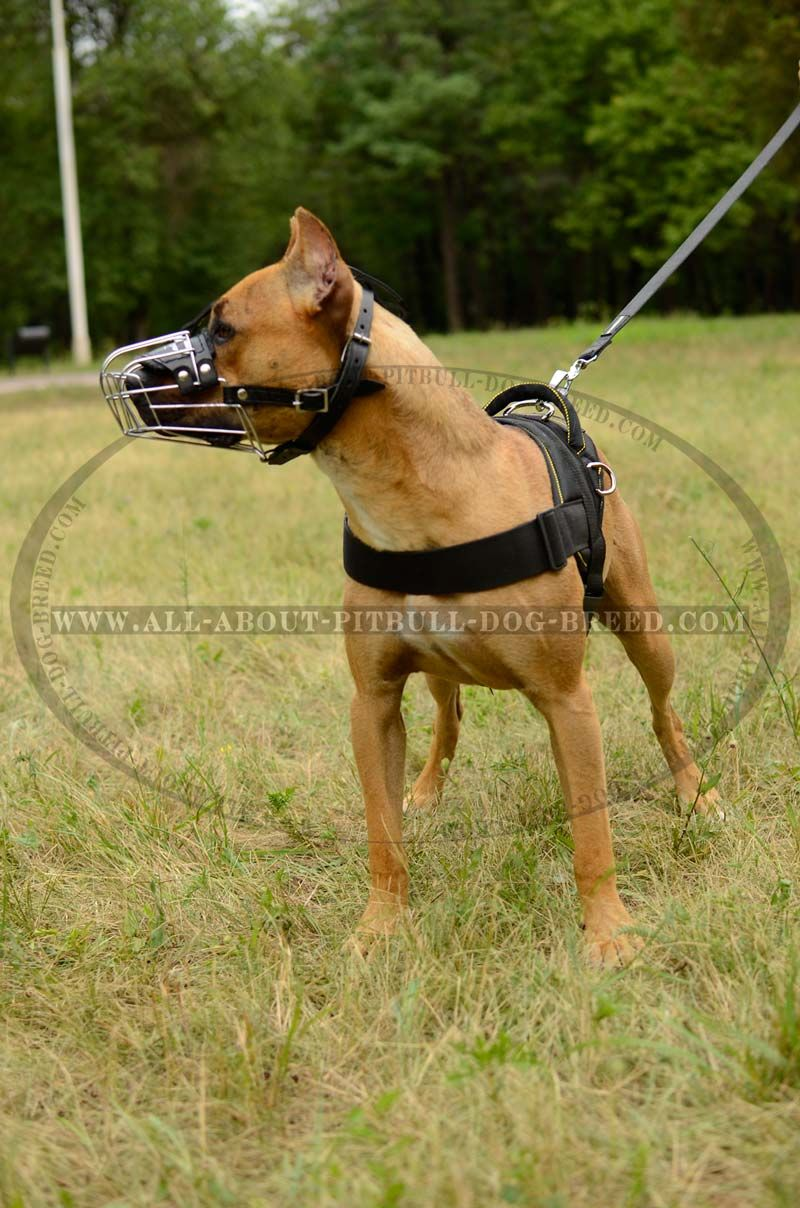 Wire Basket Dog Muzzle For American Pit Bull Terrier This