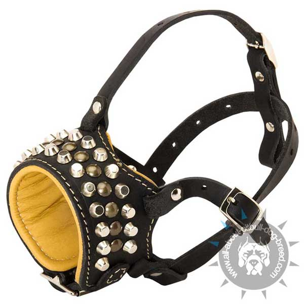 Studded leather dog muzzle for Pit Bull breed