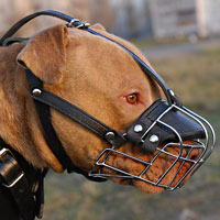 Walking Wire Basket Pitbull Muzzle