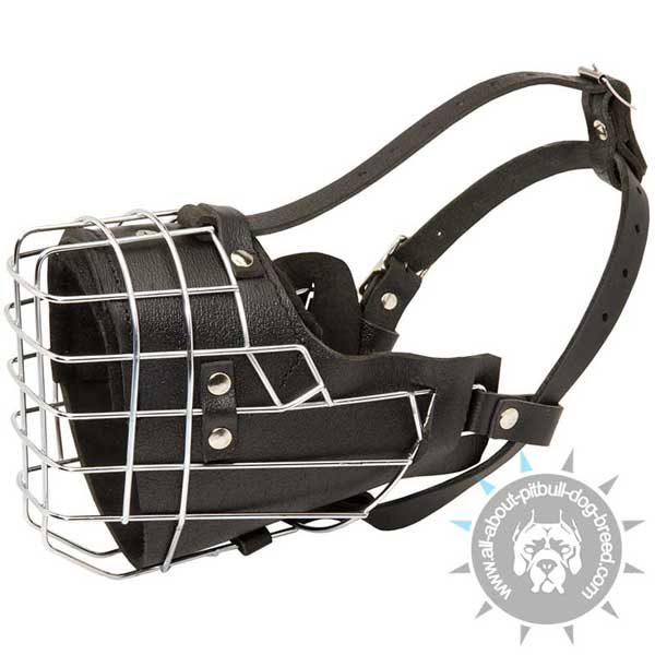 Wire basket Pitbull muzzle with padding