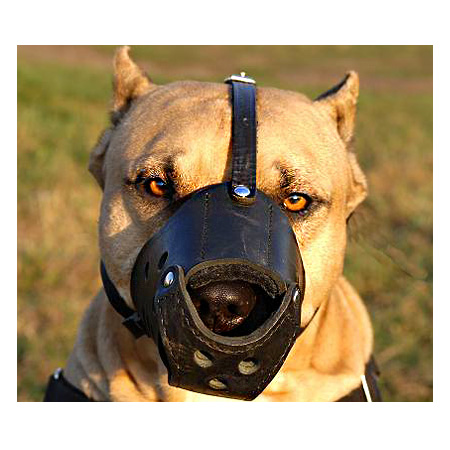Everyday Leather Amstaff Muzzle