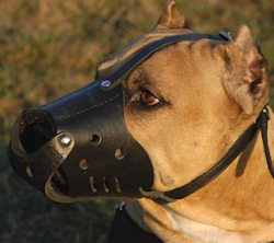 Handmade Dog Muzzle for American Pit Bull Terrier customer feedback