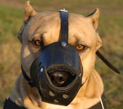 High quality Dog Muzzle for American Pit Bull Terrier customer feedback