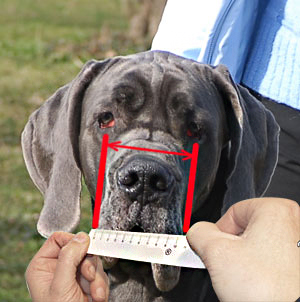 You should know how to properly measure your dog