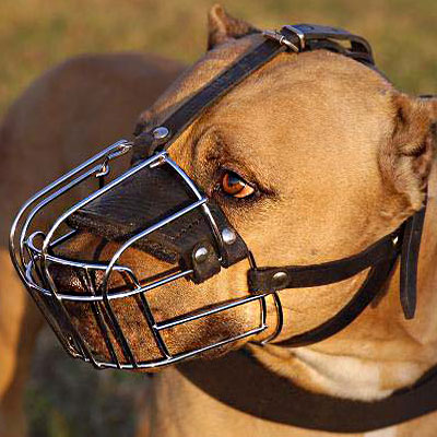 Everyday Wire Cage Pitbull Muzzle