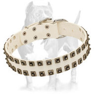 White Leather Pitbull Collar with Nickel Studs
