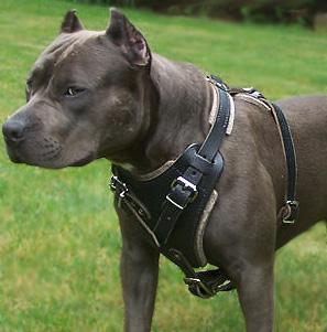 Pitbull Dog Harnesses,leather dog harness