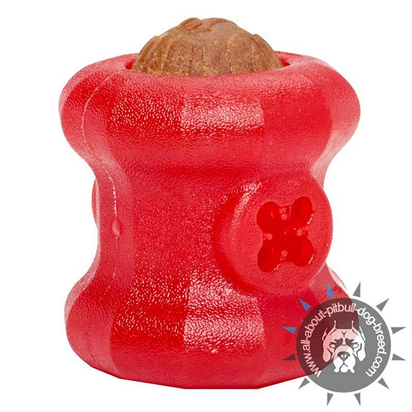 Special Rubber Pitbull Chew Treat Toy