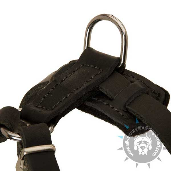 Functional Pitbull Spiked Leather Harness
