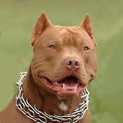prong  dog collar,pinch collar,curogan collars,chain dog collars,dog training collars