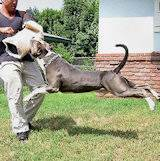 Dog protection sleeves, bite sleeves, Pitbull Training Equipment