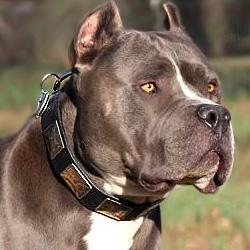 Pitbull Dog Collars,leather dog collars,nylon dog collars,leather spiked dog collars