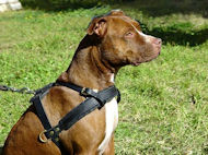 black harness for pitbull