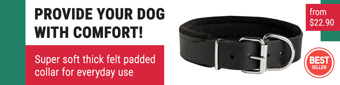 New Padded Leather Pitbull Collar for Protection Training