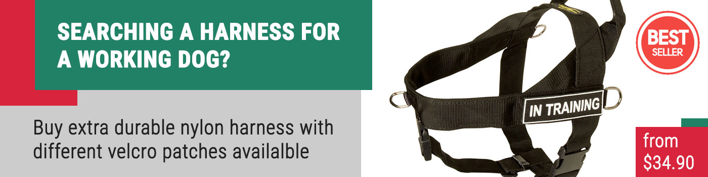 Nylon Companion Safety Harness for PITBULL
