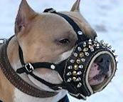 Royal Spiked Leather Dog Muzzle - American Pitbull
